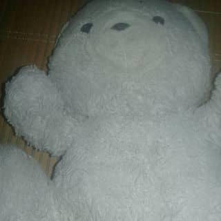 Bán gấu bông của ducthang166 tại Hưng Yên - 3824158
