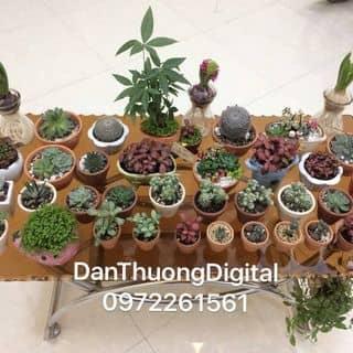 Bán xương rồng các loại... DanThuongDigital Phố Cao Phù Cừ của danthuongdigital tại Hưng Yên - 2395785