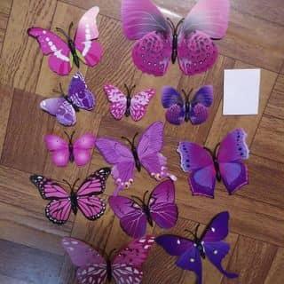 bộ bướm dán trang trí của malangthang tại Điện Biên - 2779961