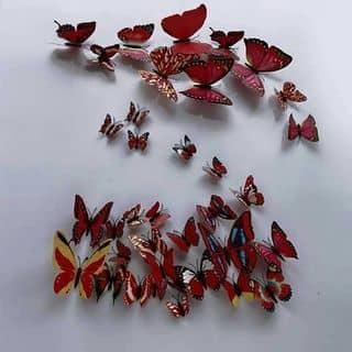 bướm dán tường của nguyenngan402 tại 0961541158, Huyện Thiệu Hoá, Thanh Hóa - 1170492