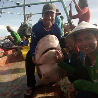 Ca mập đại dương  của 123leeyou tại Shop online, Quận Bình Thủy, Cần Thơ - 3452409
