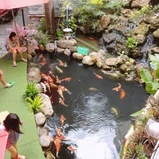 Cafe cá Koi của cao.nham.nho tại 222 Đội Cung, phường 9, Quận 11, Hồ Chí Minh - 4257545