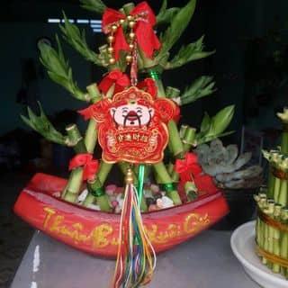 Cây Phát Lộc của nguyenlamduc tại Vĩnh Long - 2097841