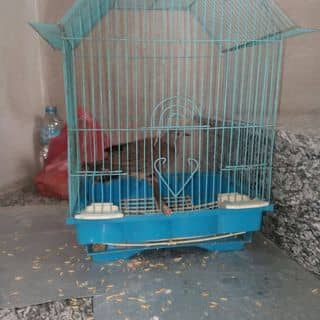 Chim cu gáy  của luckyboy217 tại Hà Nam - 3187477