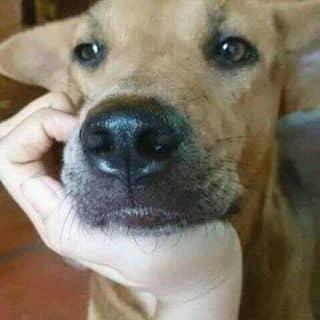 Chó đẹp của buituanphat80 tại Hồ Chí Minh - 3862767
