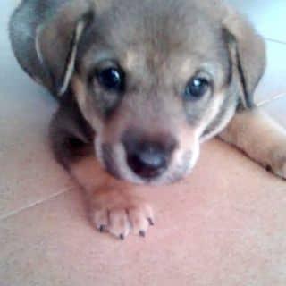 Cún Con của ngocoanhpham1 tại Quảng Ninh - 3825199