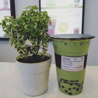 Dingtea matcha green milk tea của dingteahue tại Thừa Thiên Huế - 2242752