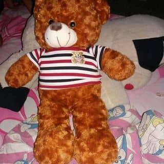Gấu teddy của nhinhi521 tại Hồ Chí Minh - 3769311