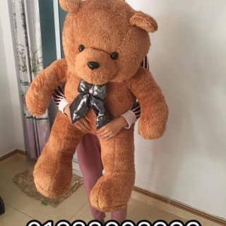 Gấu xù của tongngoc87 tại Sơn La - 2426408