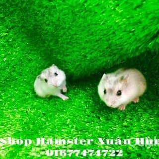 Hamster cute của xuanhung1204 tại Hồ Chí Minh - 3455745