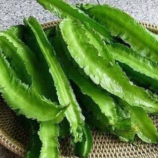 Hạt giống của tranchinh47 tại Lâm Đồng - 3283961