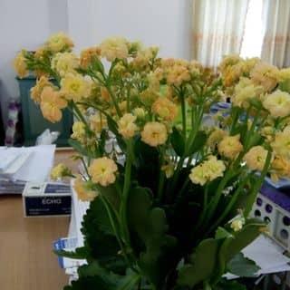 Hoa của dieutuyen1 tại SVĐ tỉnh Sơn La, Trần Đăng Ninh, Quyết Thắng, Thành Phố Sơn La, Sơn La - 3070190