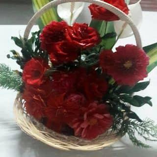 Hoa của linhlynhh tại Quảng Trị - 2277972