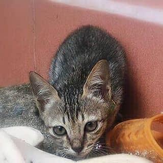 Mèo của quynhnhung13 tại Khánh Hòa - 2209756