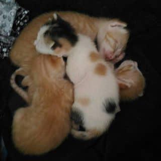 Mèo của nguyenbich99 tại Lâm Đồng - 2951638