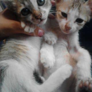 Mèo con xinh của nganscuns tại Ninh Thuận - 1994796