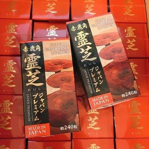 Nấm linh chi đỏ - 3914531 kun.dien - Vương Cún - 80 Nguyễn Du