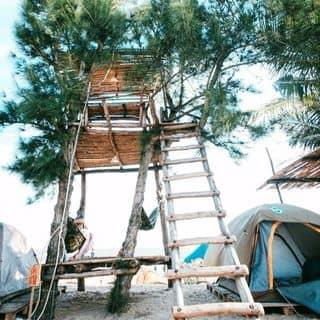 Nhà trên cây của buivan909 tại La Gi, Bình Thuận, Huyện Bắc Bình, Bình Thuận - 3505799