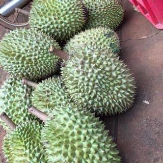 Sầu riêng của lilygem tại Biên Hoà - Đồng Nai, Thành Phố Biên Hòa, Đồng Nai - 3649854