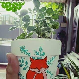 Sen thơm  của dreamgardenshop tại Hải Phòng - 3352193