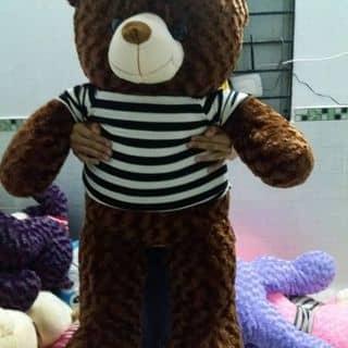 Teddy giá hạt dẻ của dangnguyen106 tại Trà Vinh - 3779817