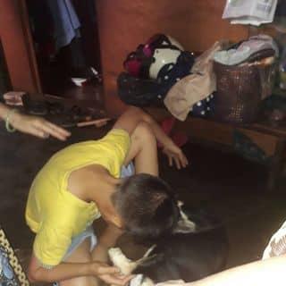 Thg nhóc và một con chó của phatductran tại Lâm Đồng - 3649383