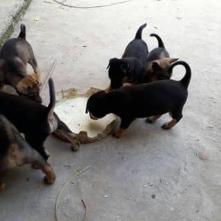 Thú cưng của chienmit1 tại Vĩnh Phúc - 3808365