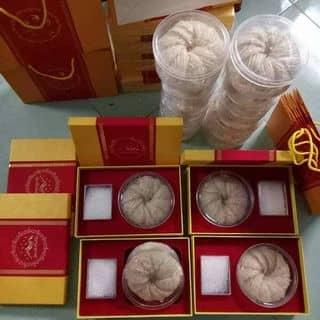 Yến tổ của cenlialoan tại Phú Yên - 2947432